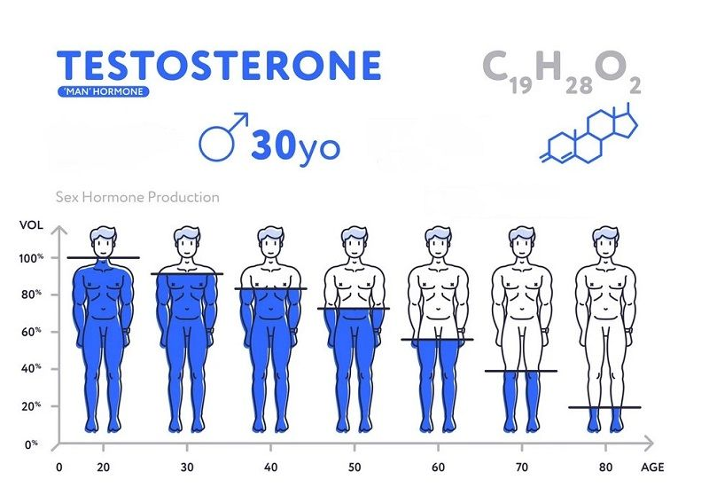 chart-of-male-hormone