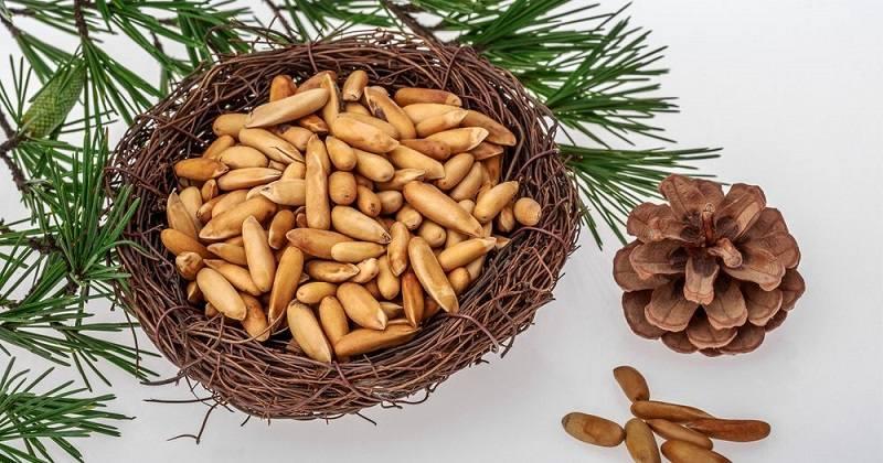 pine-nuts-penis-foods